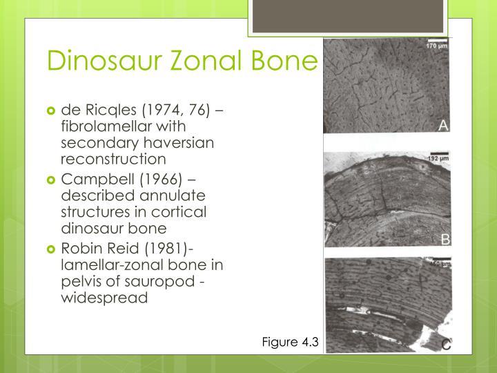 Dinosaur Zonal Bone