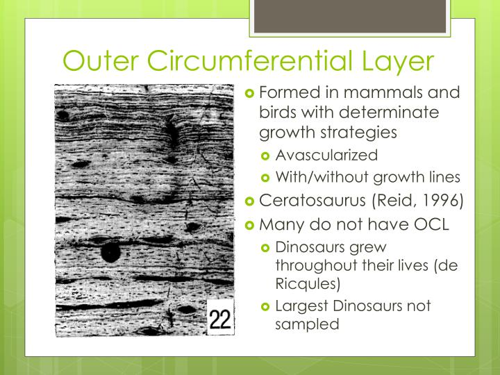 Outer Circumferential Layer
