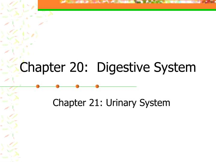 Chapter 20:  Digestive System