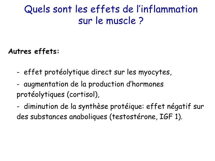 Quels sont les effets de l'inflammation sur le muscle ?