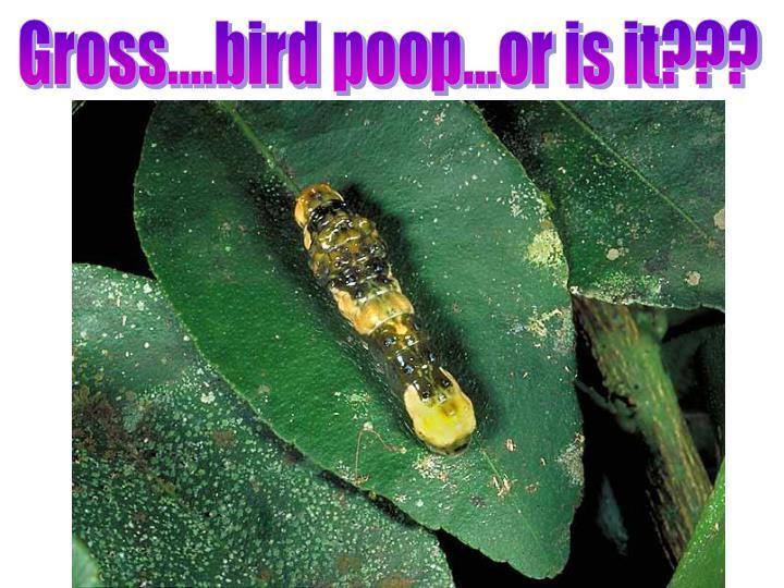 Gross....bird poop...or is it???