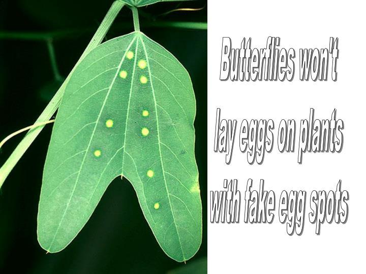 Butterflies won't
