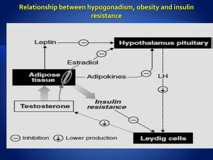 Relationship between hypogonadism, obesity and insulin resistance