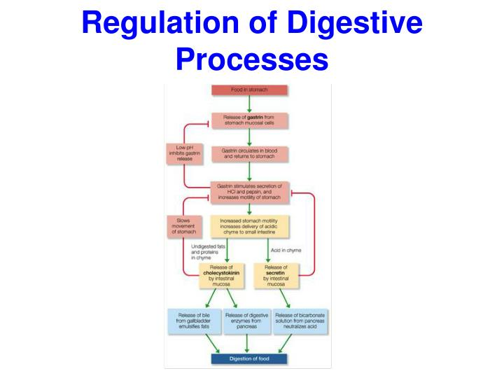 Regulation of Digestive Processes