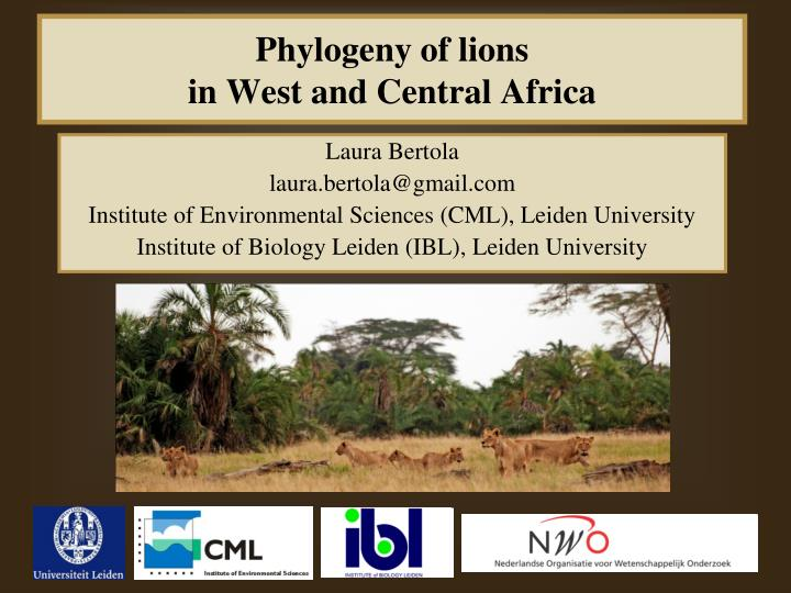 Phylogeny of lions in west and central africa