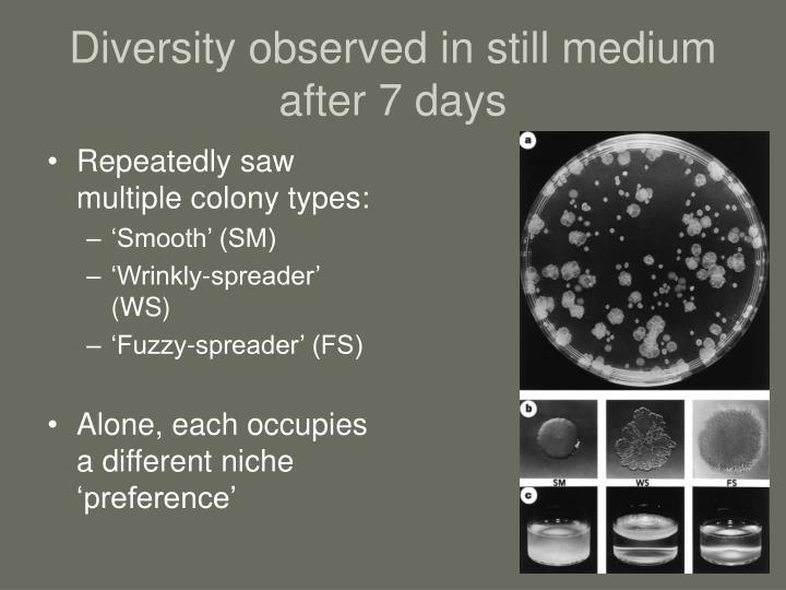 Diversity observed in still medium after 7 days