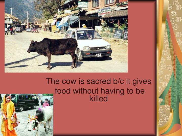 c. Cows