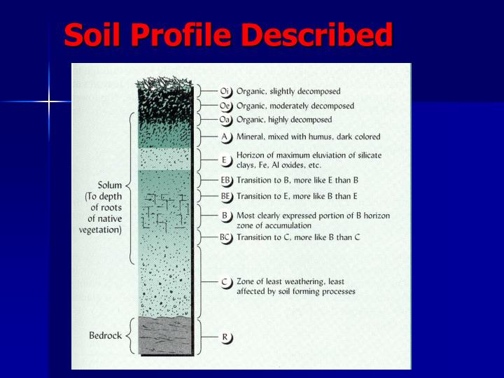 Soil Profile Described