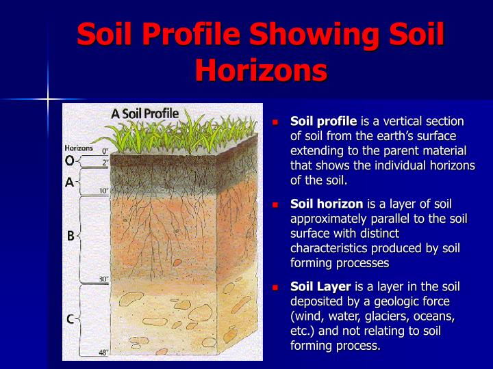 Soil Profile Showing Soil Horizons