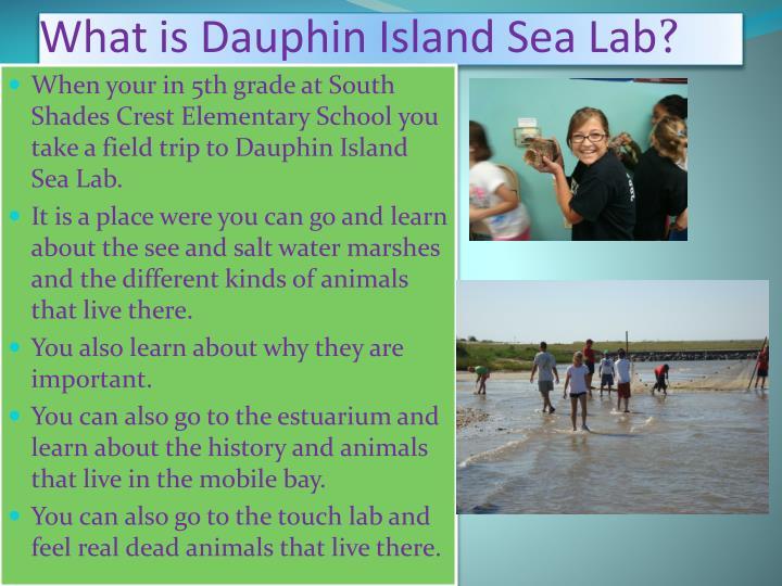 What is Dauphin Island Sea Lab