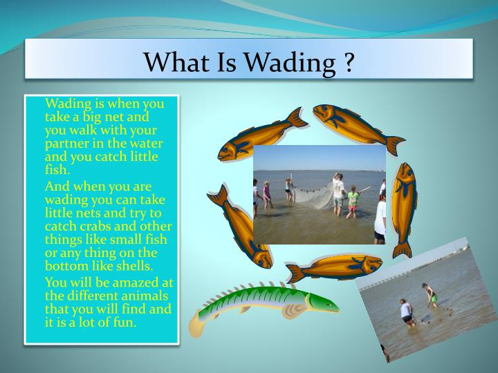 What Is Wading ?