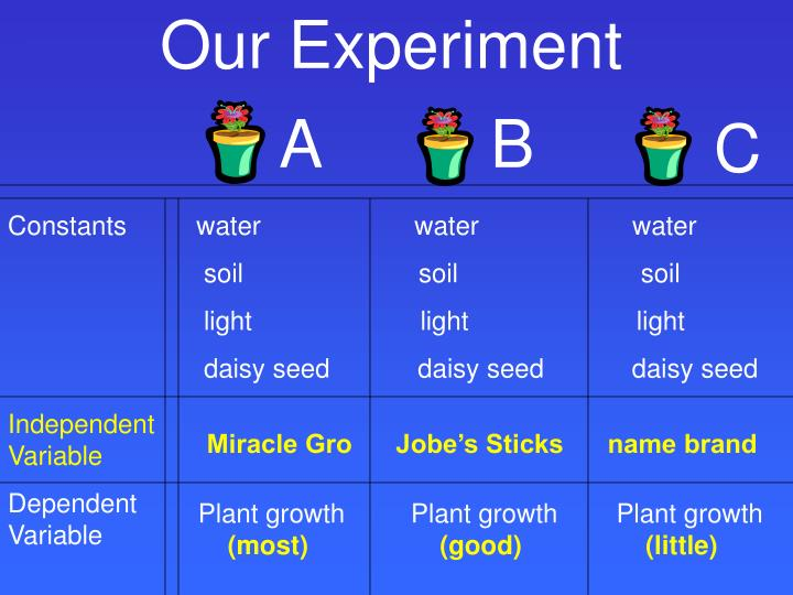 Our Experiment