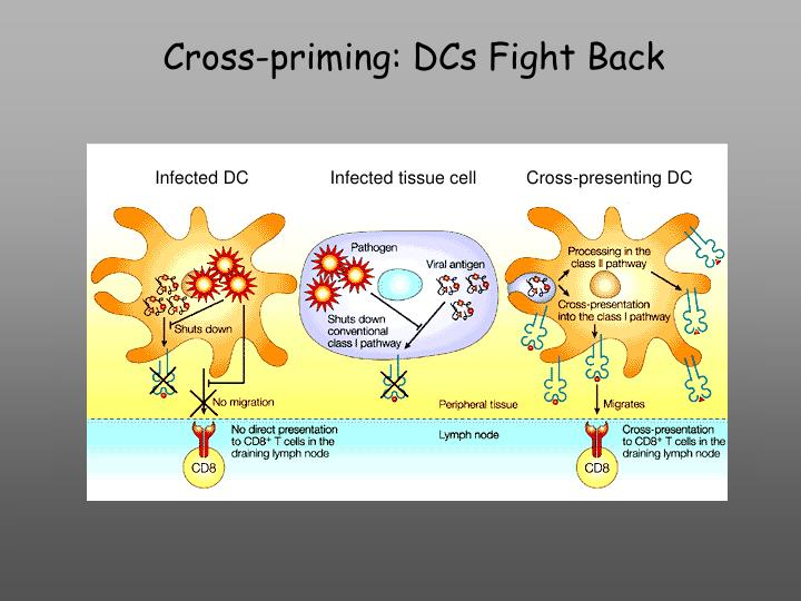 Cross-priming: DCs Fight Back