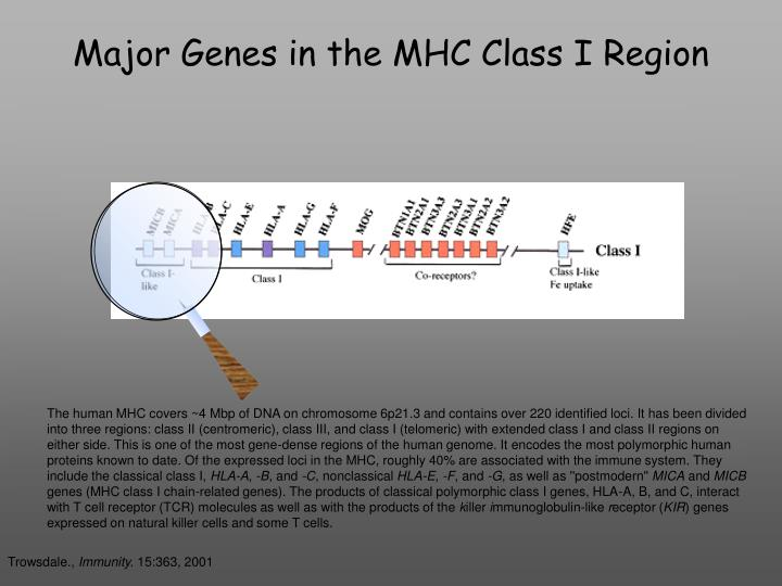 Major Genes in the MHC Class I Region