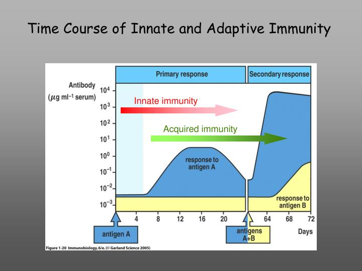Time Course of Innate and Adaptive Immunity