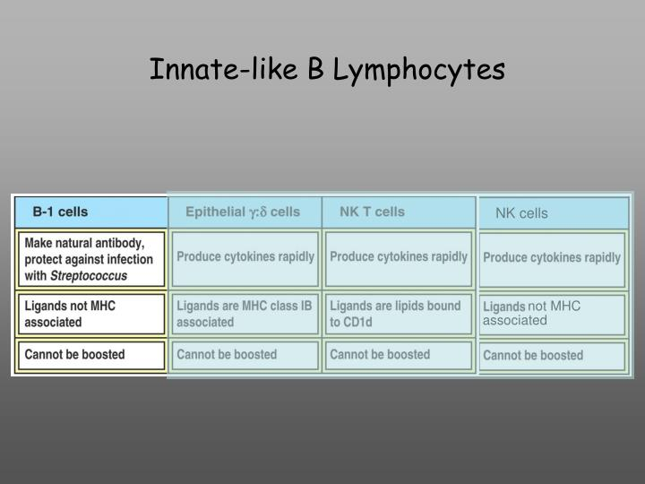 Innate-like B Lymphocytes