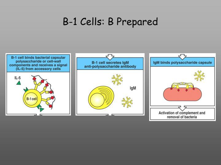 B-1 Cells: B Prepared
