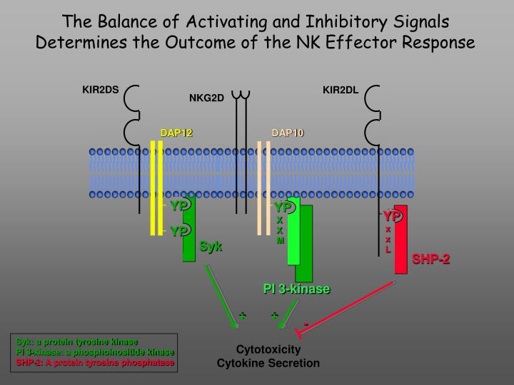The Balance of Activating and Inhibitory Signals