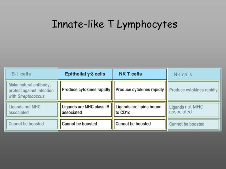 Innate-like T Lymphocytes
