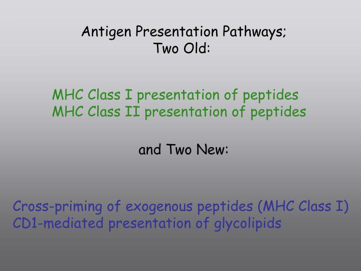 Antigen Presentation Pathways;