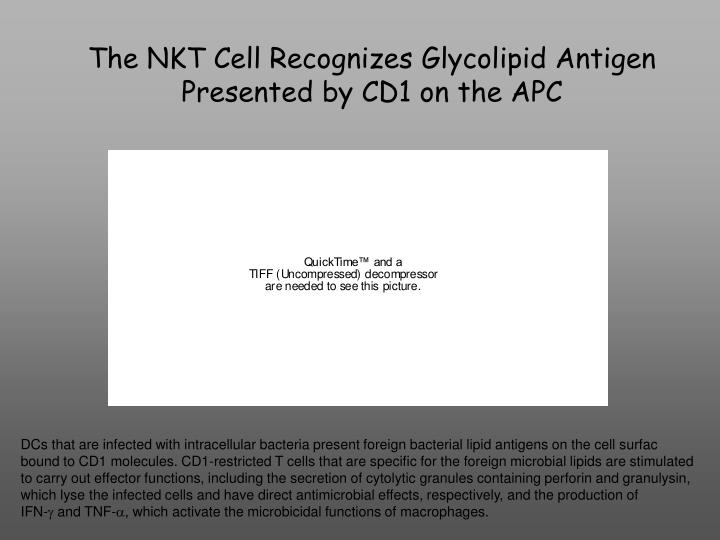 The NKT Cell Recognizes Glycolipid Antigen