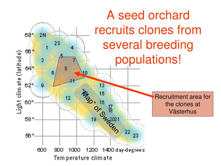 A seed orchard recruits clones from several breeding populations!