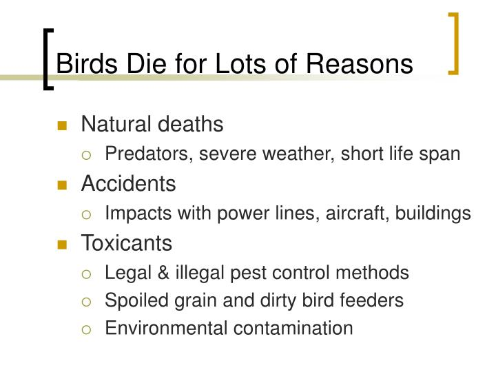 Birds Die for Lots of Reasons