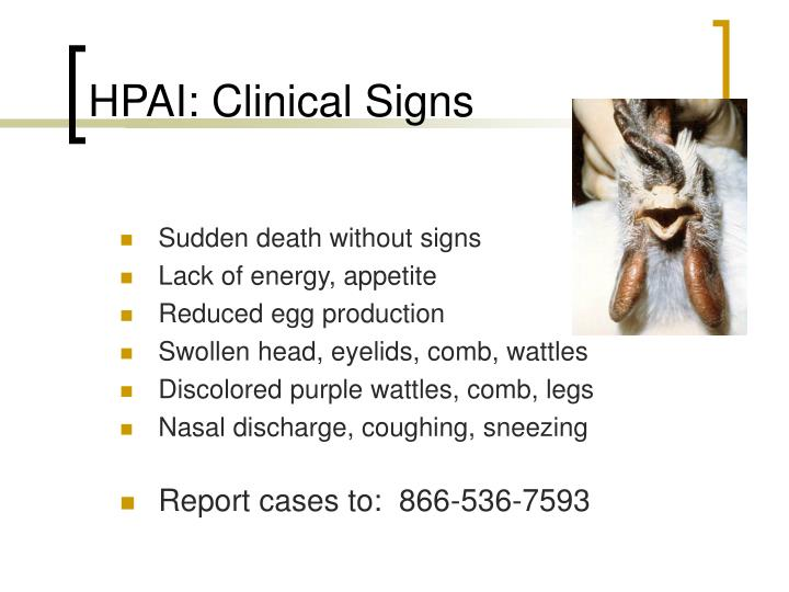 HPAI: Clinical Signs