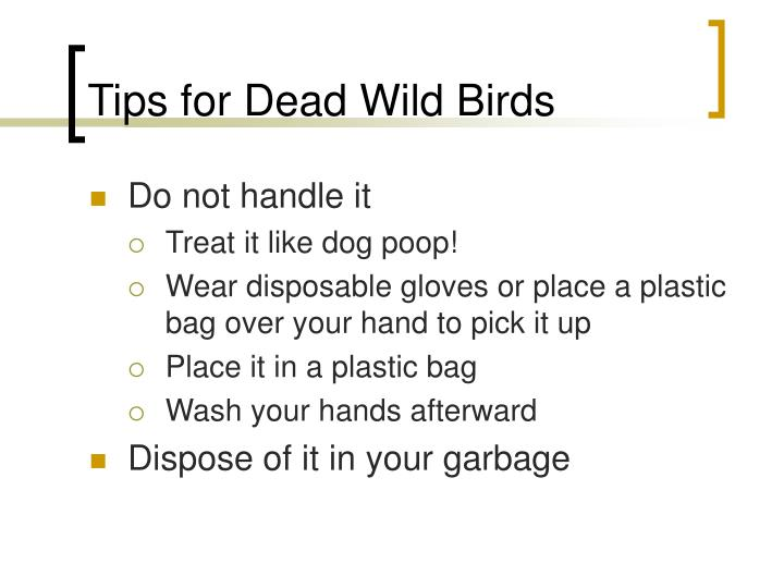 Tips for Dead Wild Birds