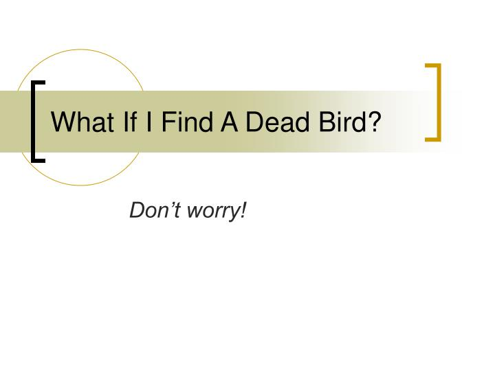 What If I Find A Dead Bird?