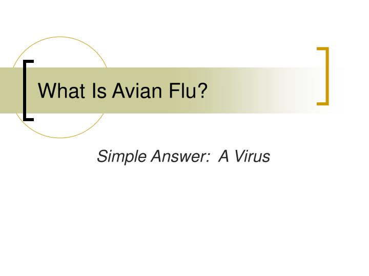 What Is Avian Flu?