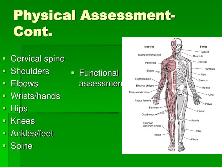Physical assessment cont