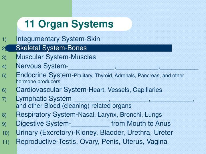 11 Organ Systems