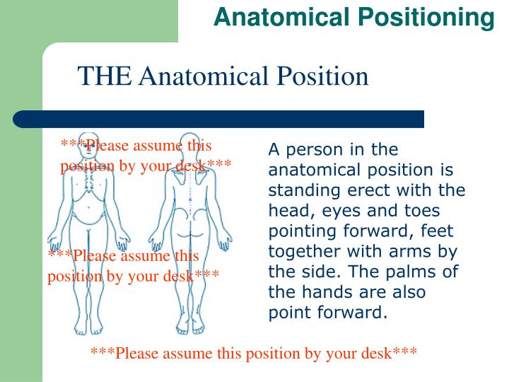 Anatomical Positioning