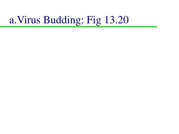 a.Virus Budding: Fig 13.20