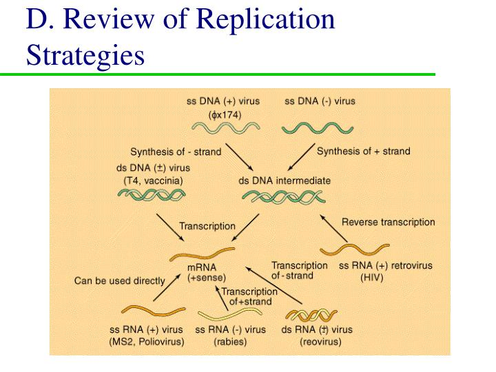 D. Review of Replication Strategies