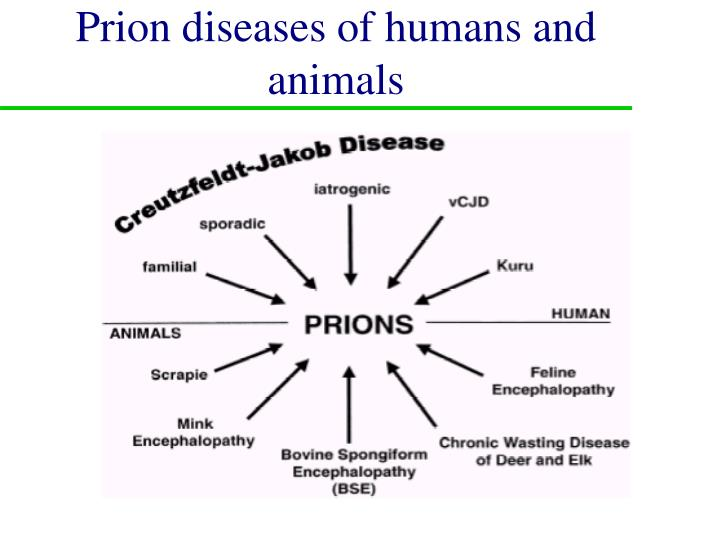 Prion diseases of humans and animals