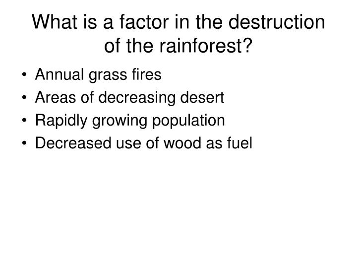 What is a factor in the destruction of the rainforest?
