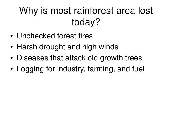 Why is most rainforest area lost today?