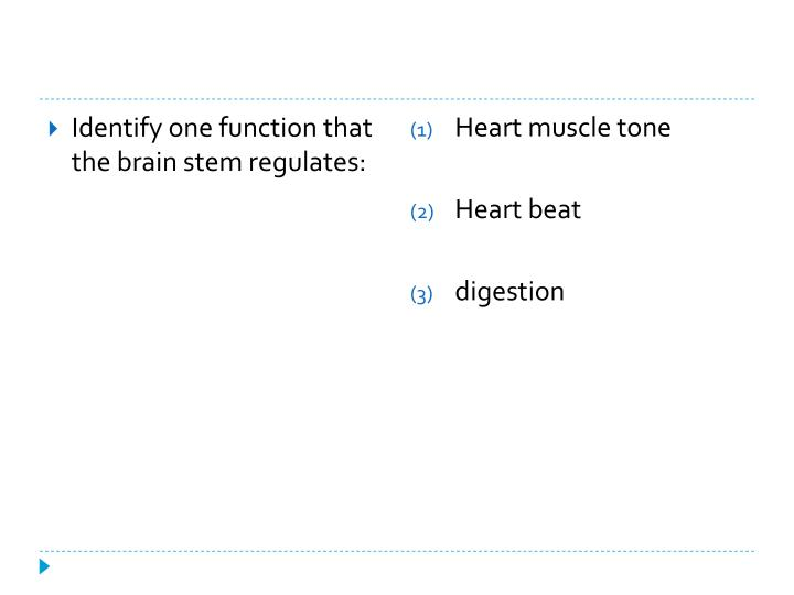 Identify one function that the brain stem regulates: