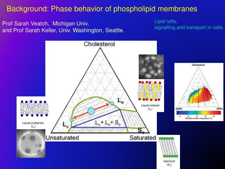 Background: Phase behavior of phospholipid membranes