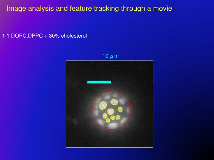 Image analysis and feature tracking through a movie