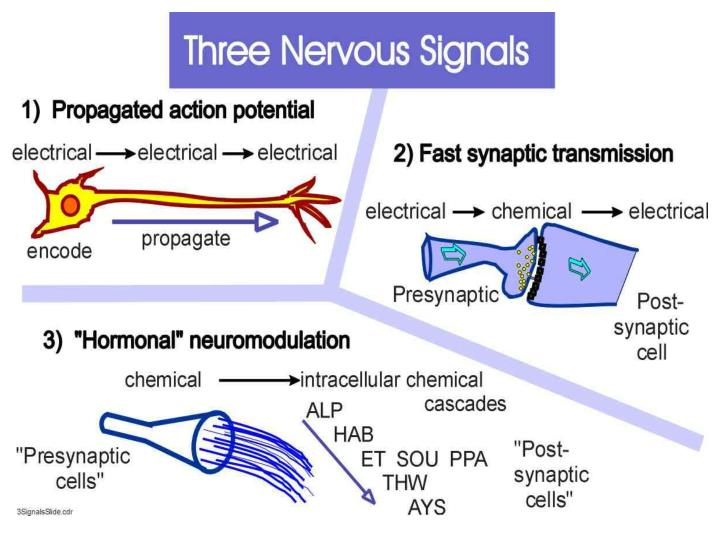 3 Kinds of nervous signal
