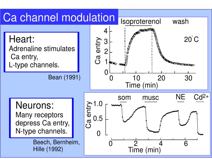 Ca channel modulation