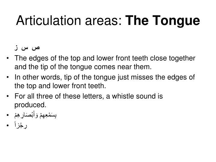 Articulation areas: