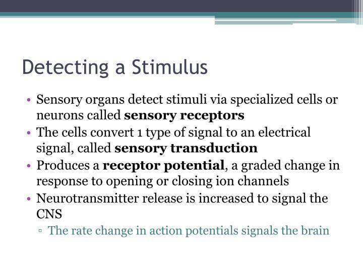 Detecting a Stimulus