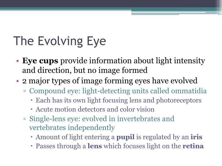 The Evolving Eye