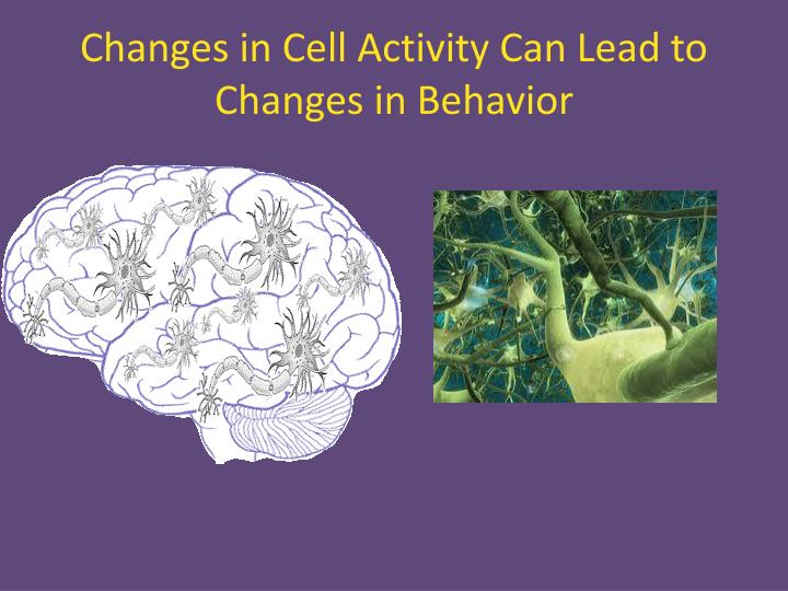 Changes in Cell Activity Can Lead to Changes in Behavior