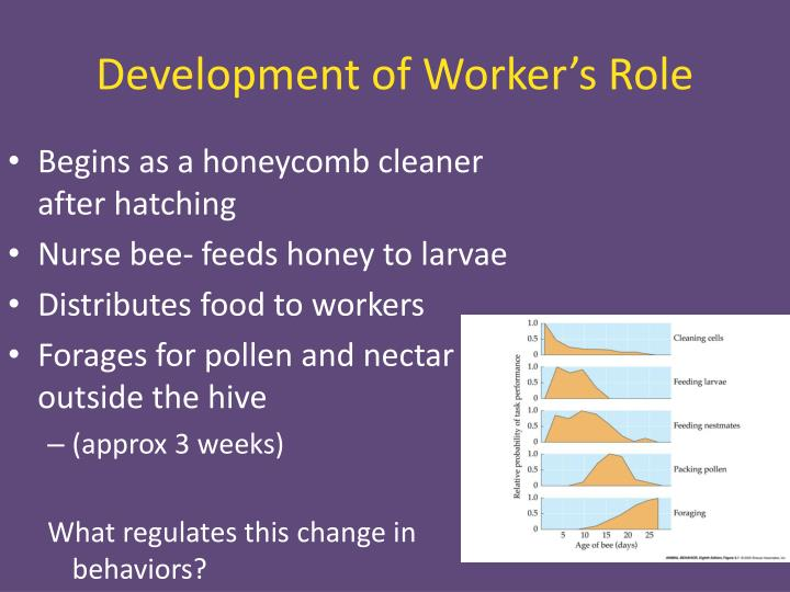 Development of Worker's Role