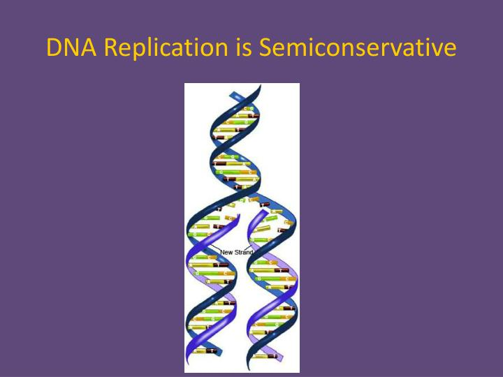 DNA Replication is Semiconservative